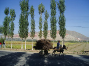 12-kirgisistanfuhrwerk