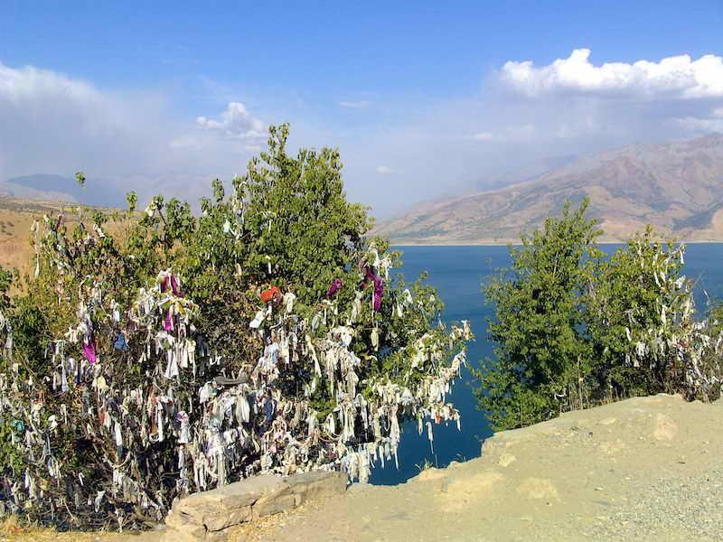 Chimgan - Wunschbaum: Hier findet jeder Wunsch seinen Platz