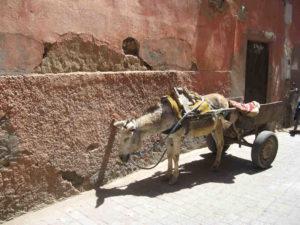 Marokko/Marrakesch: In brütender Hitze – Warten auf Arbeit