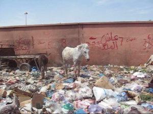 Pferd und Esel im Müll inklusive Überwachungskamera