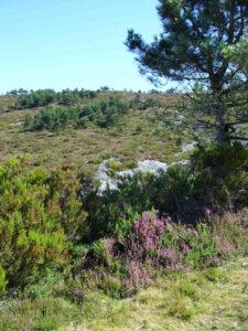 Asturien- es grünt so grün