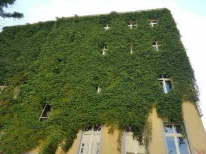 Deutschland: Berlin-Prenzlauer Berg - Und es grünt doch noch: Hinterhofatmosphäre Altbau saniert